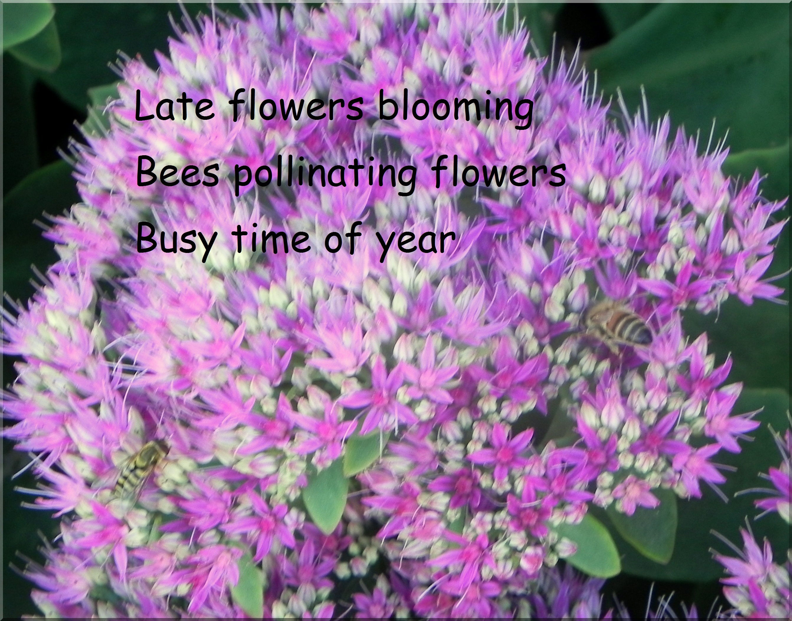 Beautiful Flower Quotes QuotesGram