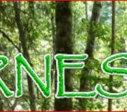Accessible Wilderness Society