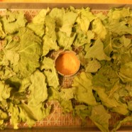 Drying Kale for chips
